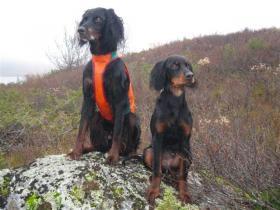 Rypedalen Zico og Tara. Foto Farberg