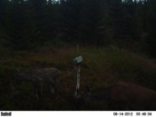 viltkamera2011-077