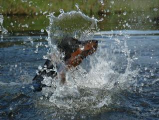 Bilder 2007 (8)