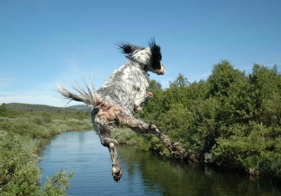 Marco bader i elven