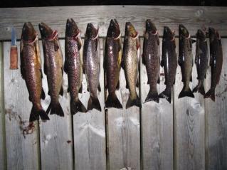 Bra kveldsfiske